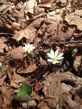 Photo of spring flowers in woods