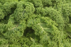 Photo of kale. Source: Creative Commons.