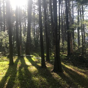 A Hike in the Woods – What's inside my handy guide