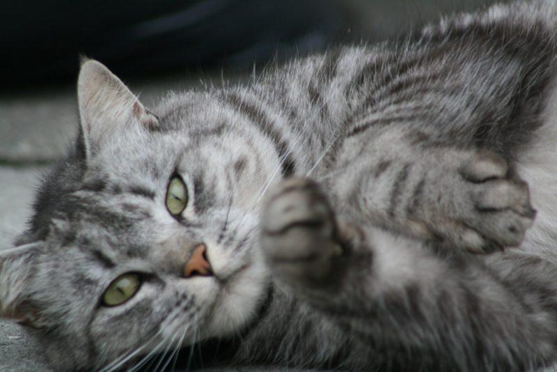"""""""cute cat"""" by Helgi Halldórsson/Freddi is licensed under CC BY-SA 2.0"""