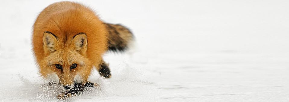 Winter Wildlife Photography Workshop 2013