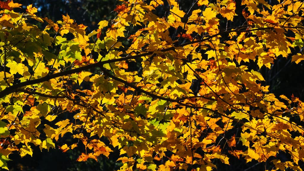 Fall is in the Air – Grab Your Camera