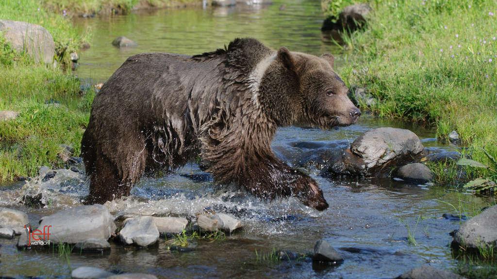California Wildlife Photography Workshop April 2013