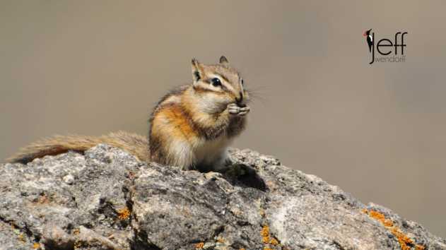 Nikon N1V1 Wildlife photography by Jeff Wendorff