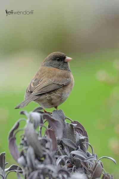 Bird Photography Tip – Shoot Local