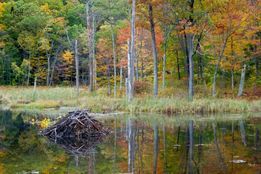 Relfections of fall - Beaver Pond photographed by Jeff Wendorff
