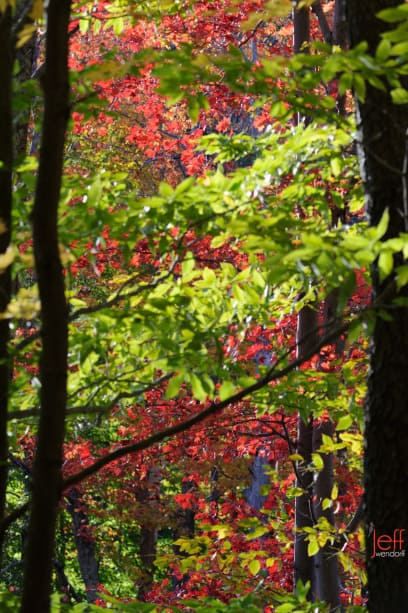 Abstract fall foliage in Vermont photographed by Jeff Wendorff
