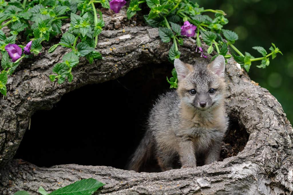 Wildlife Photography Workshop – Baby Animals