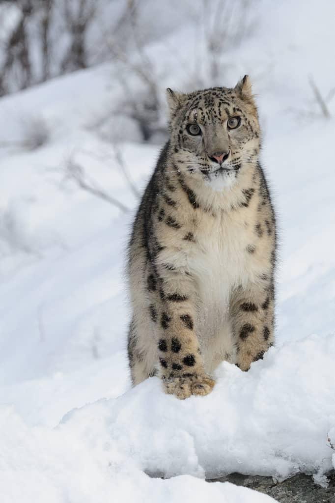 Photography Workshop – Winter Wildlife