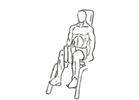 Thigh Adductor