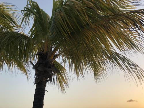 Bonaire (February 2020)