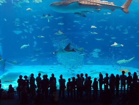 Manila Ocean Park Fake