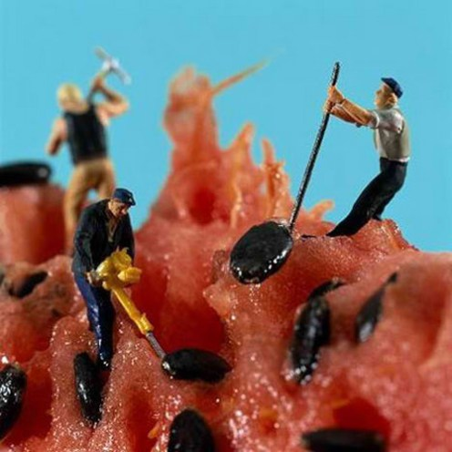 worker_seed_watermelon_landscape