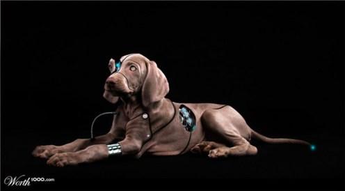 wireless-doggie