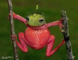 strawberry-frog
