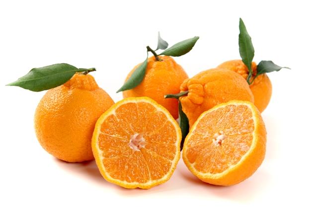 Ù ؟؟ ت٠؟؟ Ø¬Ø © بØØ «Ø§Ù ؟؟ ص٠؟؟ Ø ± ع٠؟؟ mand jujeju mandarinâ ؟؟؟؟؟