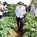 Gubsu Dukung Tingkatkan Produksi Kentang di Karo