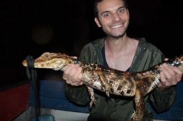 Caliner un caiman en Guyane