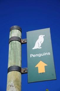 Pingouins du Cap