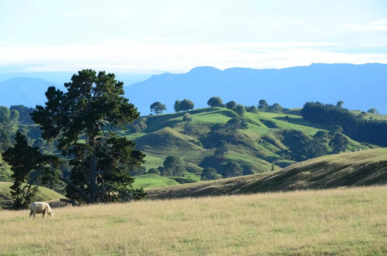 Collines et vallées de Matamata
