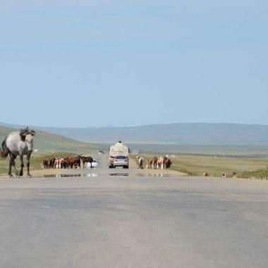 Chevaux sur la route