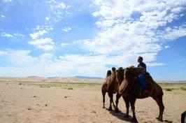 A dos de chameau dans le Gobi
