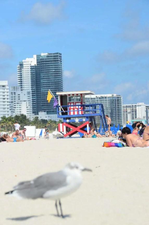 Mouette sur la plage