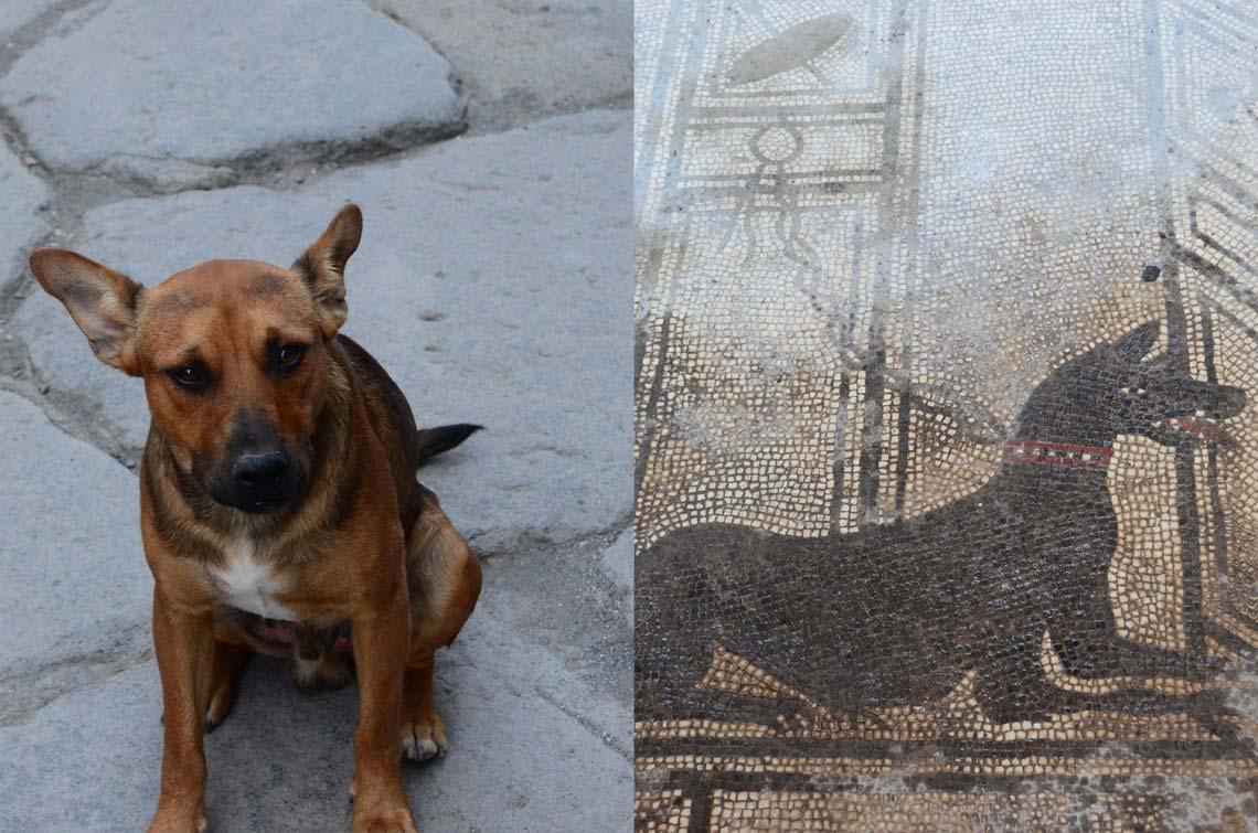 Chien ou canis? Pompei, Italie