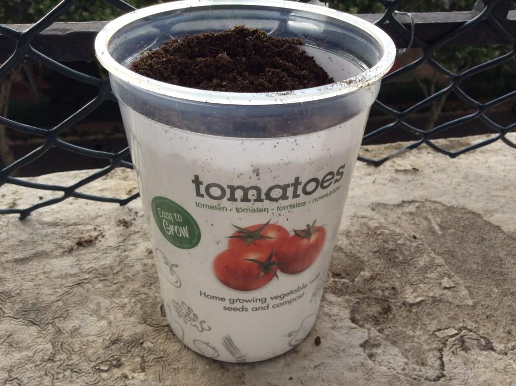 Plan tomate