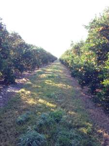Follow that Food: From the Orange Groves to the Orange Juice Glass {Plus a Giveaway}