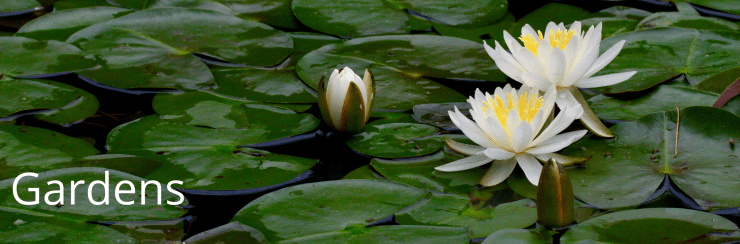 Yellow lily flowers floating on top of the pond along with lily pads. White text reads: Gardens.