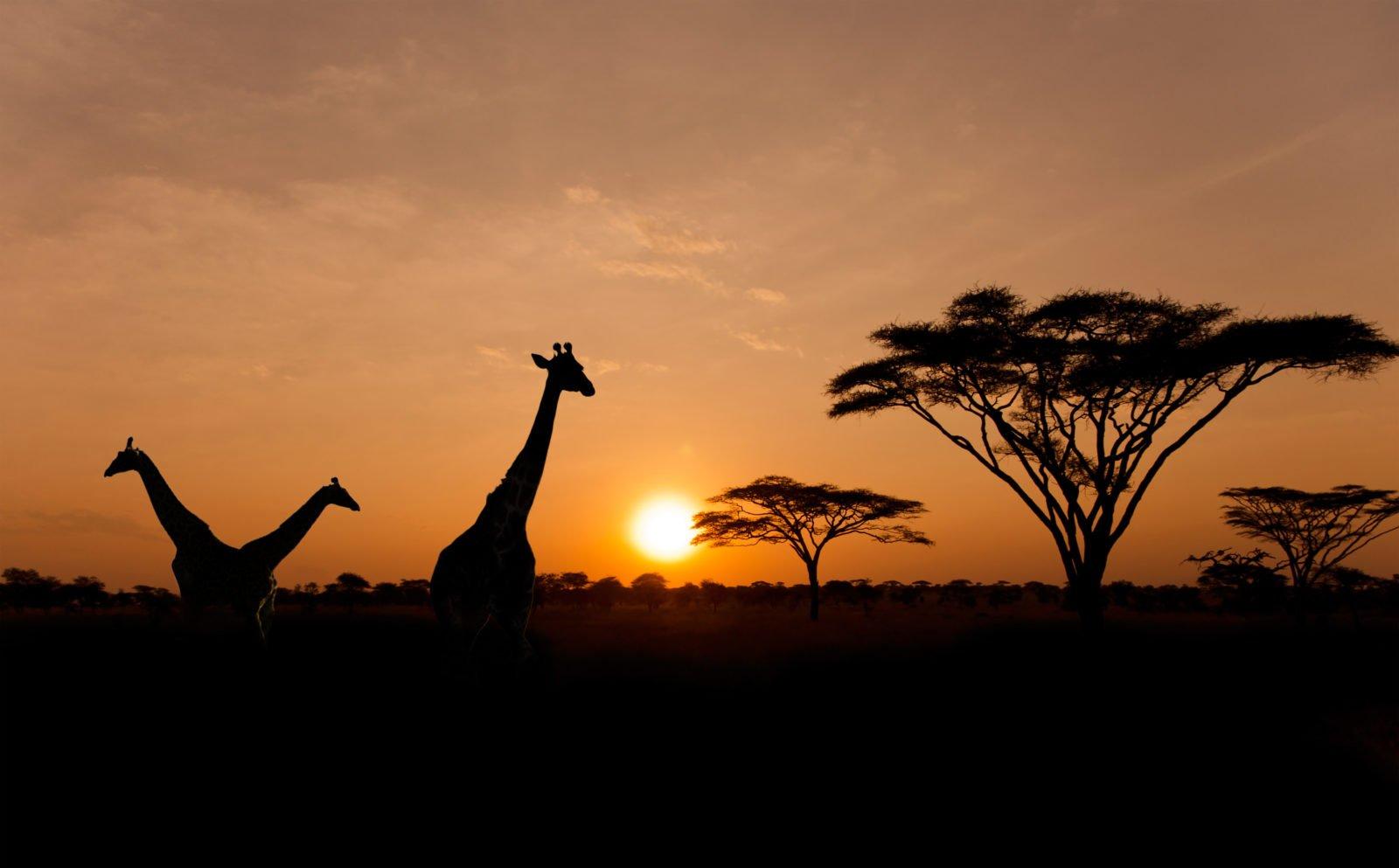 Serengeti | The Lion King | Pride Rock | Giraffe