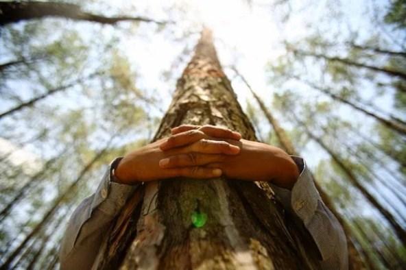 étreindre-des-arbres-3.jpg