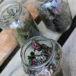 Diy Mason Jar Terrarium Jenna Burger Design Llc