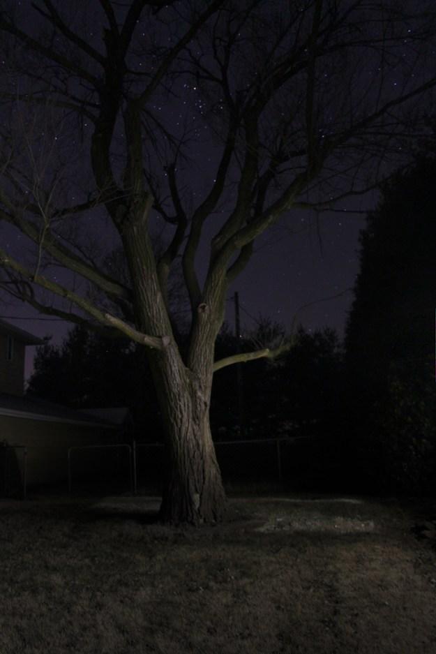 Night Trees Long Exposure Stars Jenna Citrus ArtIMG_9871