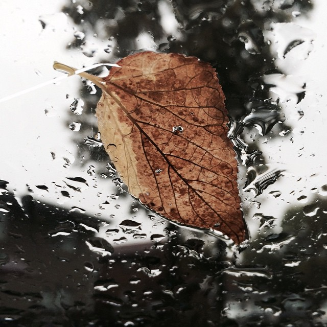 When the last leaf blows…