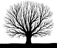 Tree as an example of a fractal we see and take for granted