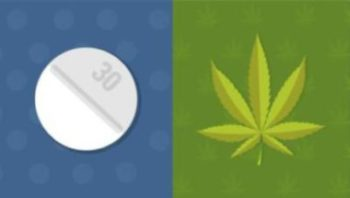 Marijuana and Opioids
