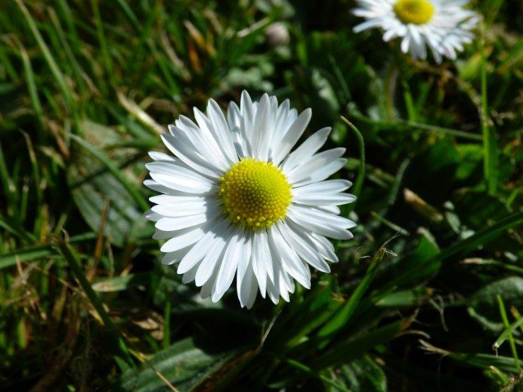 Daisy ©jenniferramirezbaulch.com