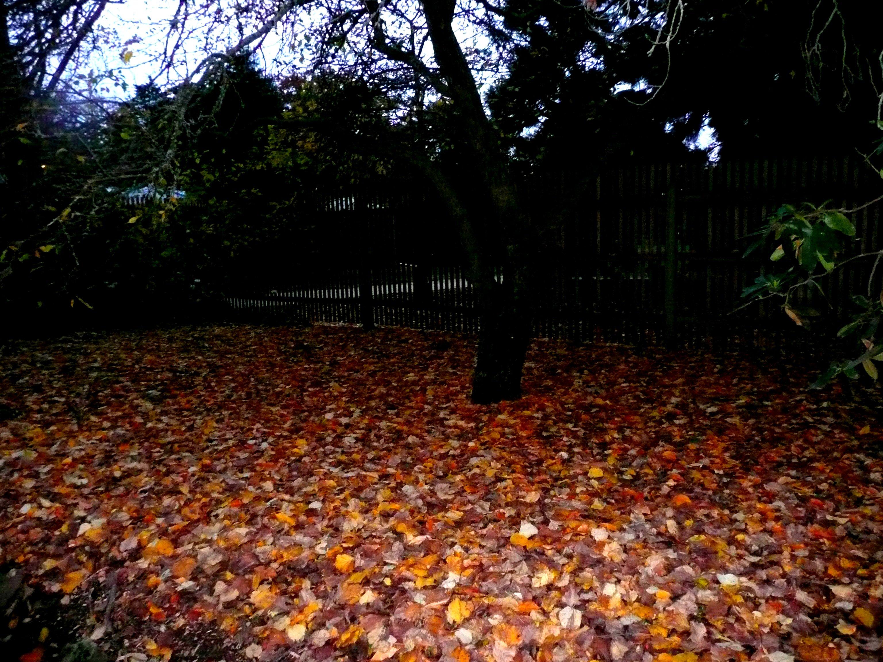 Ballarat Autumn Leaves Bed