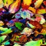 Ballarat True Colours Autumn May 2017