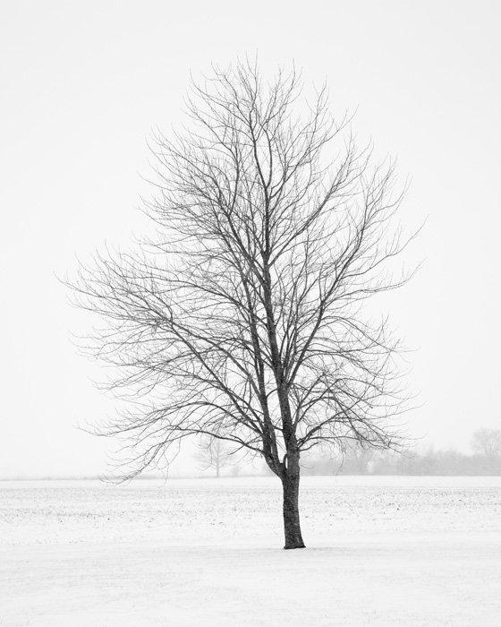 Tree Wall Art - Elder