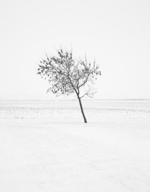 Frosty Gale - Winter Tree Photograph