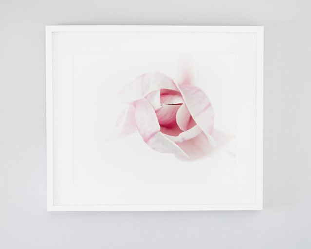 Magnolia #1 - Pink Magnolia Wall Art