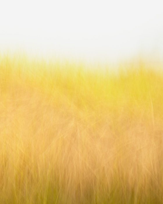 Golden Beach Grass Picture - Sunshine and Breeze