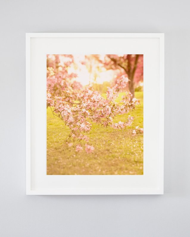 Strawberry Dream Whip - Pink Flowering Tree Branch Photograph