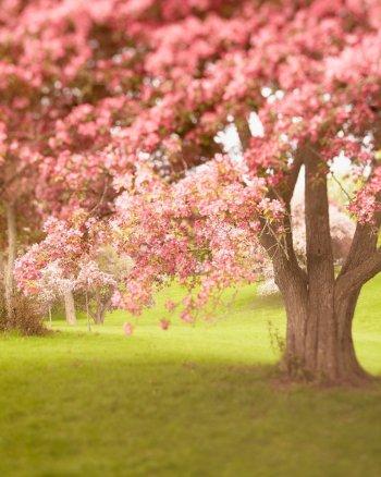 Gentle Healing - Spring Nature Photography Art Print