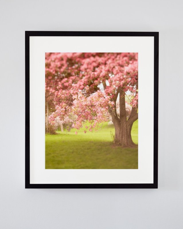 Gentle Healing - Spring Nature Photography Art Print