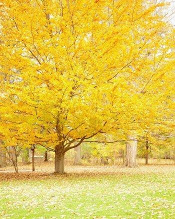 Blonde Bombshell - Fall Landscape Photography Print