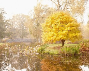 Morning Stroll Along the River - Fall Tree Landscape Photography